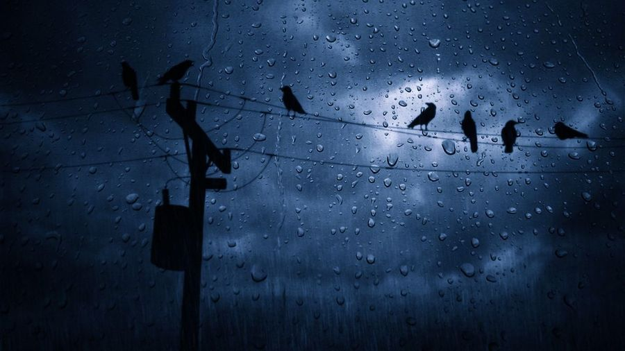 Low angle view of silhouette birds on power lines seen through wet window