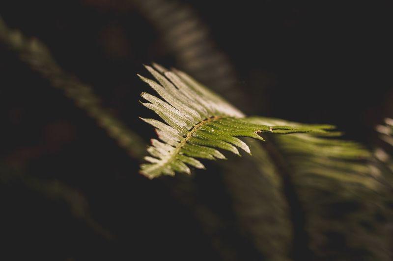 Leaves Leaves🌿