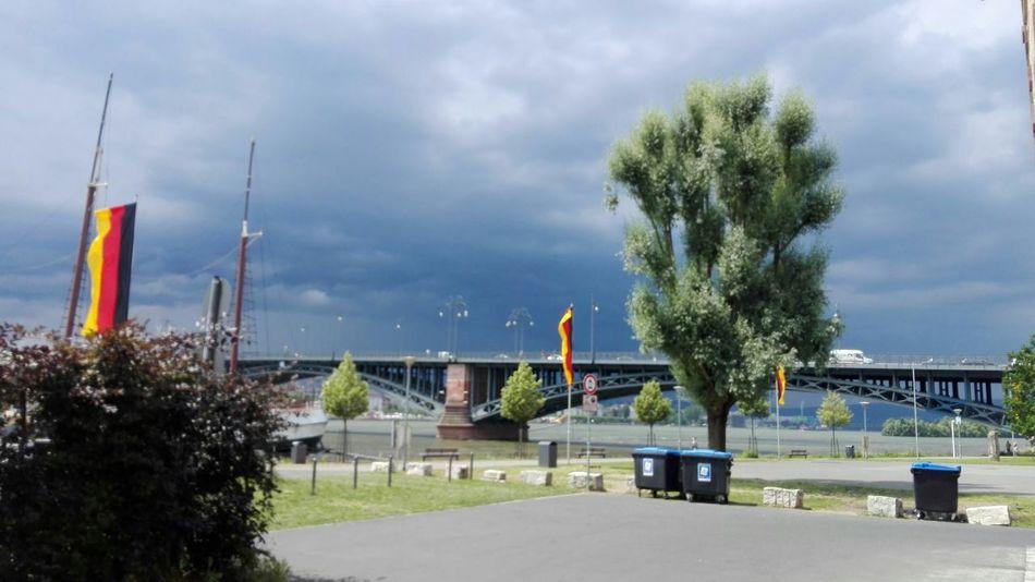Tree Day Business Finance And Industry City Outdoors Teamwork People Sky 2016 Rhein Rheinufer Blick Auf Mainz Theodor-Heuss-Brücke