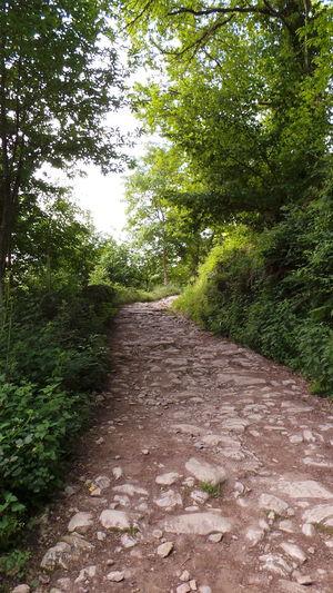 Jakobsweg El Camino De Santiago CaminodeSantiago Cebreiro Camino Way Weg O Cebreiro Pilgrimage Pilgern Way Of Saint James