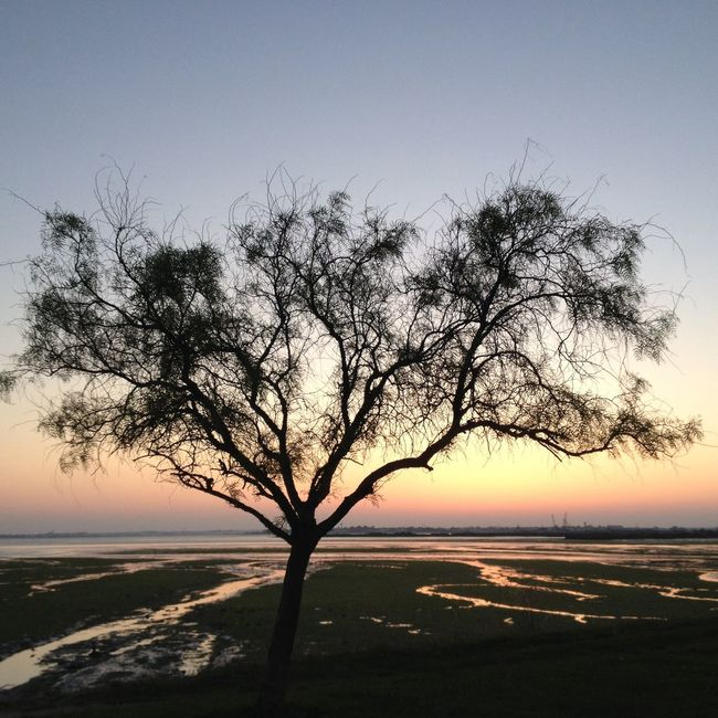 Tree in the low-tide IPhone Photography Nature Enjoying Life Tides water Sea River Trees Branches