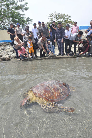 Indonesian release Sea Turtle_ Animal Wildlife Animals In The Wild Beach Crowd Day Group Of People Land Large Group Of People Marine Men Nature Outdoors Real People Reptile Sea Turtle Vertebrate Water