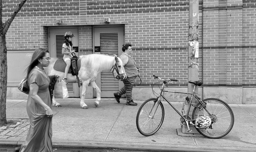 Pony ride in NYC Pony Ride Mode Of Transport People Walking  NYC Street Street Photography People Photography People Watching Streetphotography