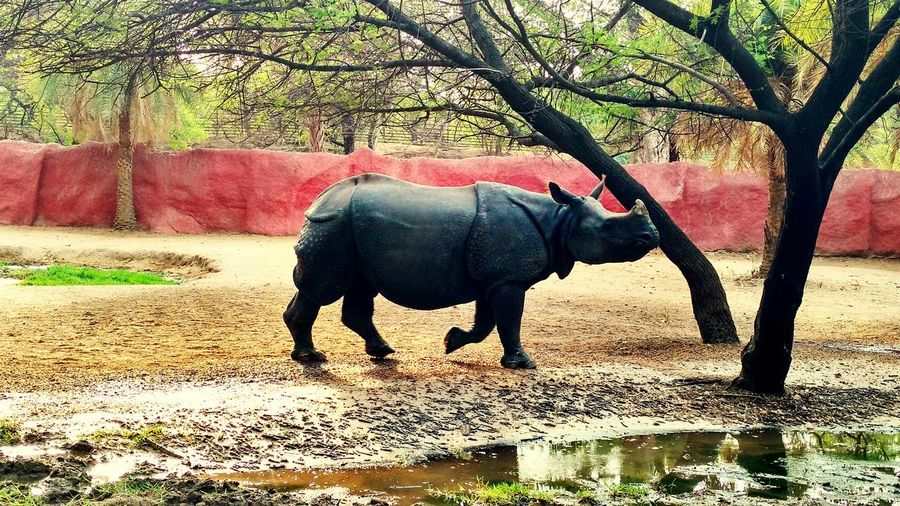 One Animal Tree Mammal Rhinoceros Sky Tree Animals In The Wild Animal Wildlife Animal Themes Elephant Outdoors Nature Day No People Safari Animals Domestic Animals Water African Elephant nehru zoo,. Hyderabad