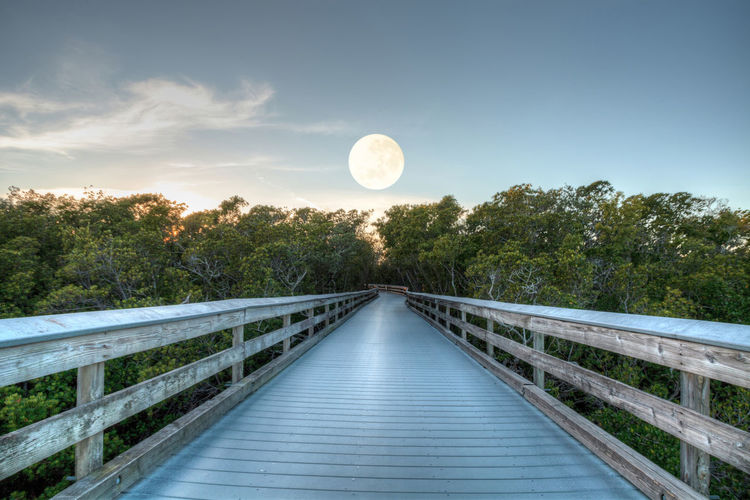 Moonset over the Boardwalk leading to Clam Pass at sunrise in Naples, Florida Astronomy Beauty In Nature Boardwalk Bridge - Man Made Structure Clam Pass Day Footbridge Lake Moon Moonset Nature No People Outdoors Railing Scenics Sky The Way Forward Tranquil Scene Tranquility Tree Water