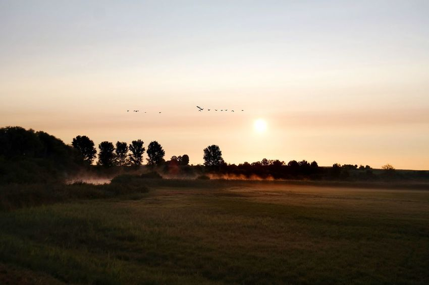 sundaysmorningmood Sunrise Nature Photography Beauty In Nature Reinheimer Teich My Point Of View My Place To Relax Foggy Morning Foggy Gold Colored Bird Tree Flying Flock Of Birds Rural Scene Sky Animal Themes Grass Landscape Golden Grass Area