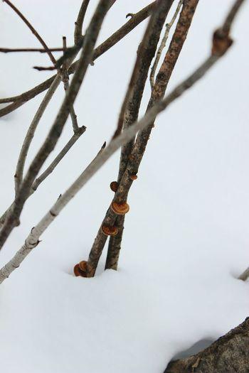 sprigs Sprigs Snow Cold Temperature Winter Drilling Rig Winter Sport Snowing Sky Frozen Deep Snow Ice