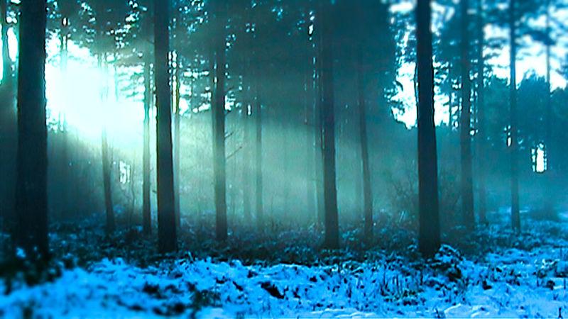 DV Video captured during the bad snows of 2009 in YOrk DV Trees Winter York Yorkshire Blue Bokeh Landscape Snow Sun Wheldrake Komorebi