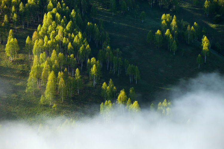 High Angle View Of Trees On Field During Foggy Weather