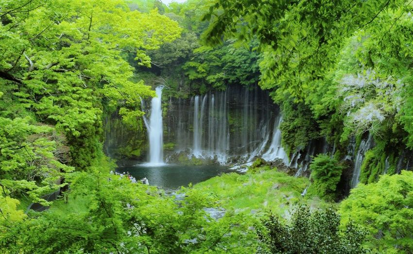 Japan Pentax PENTAX KP Plant Tree Beauty In Nature Water Scenics - Nature Green Color Growth Nature Waterfall Forest Outdoors No People
