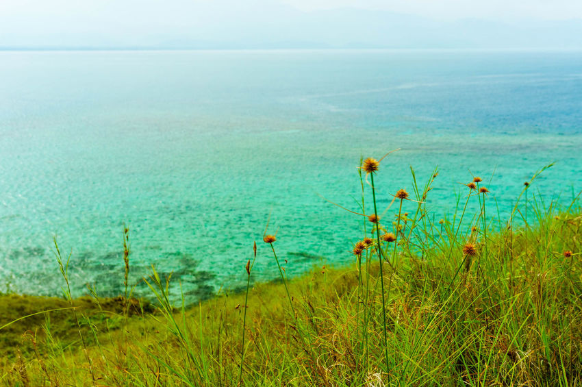 Flower from the top Malalison, Antique Adventure Philippines Antique Flower Grass Hill Mountain Water Sea Beach UnderSea Wilderness Area Sky Horizon Over Water Grass Landscape Plant Wildflower