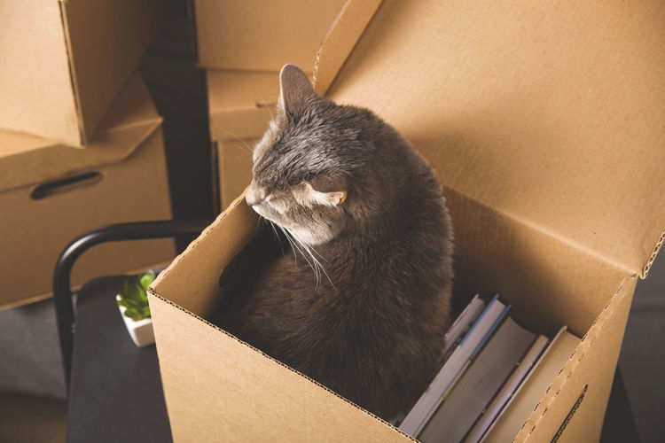 Moving concept with things folded in a box and cat