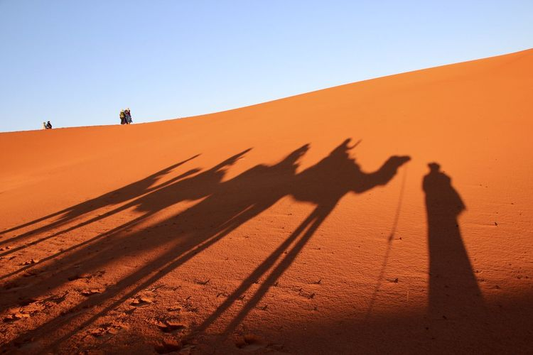 Shadow of people and camels on sand dune against clear sky