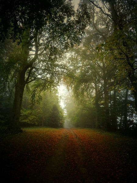 Taking Photos TreePorn Nature On Your Doorstep Outdoors Beauty In Nature Beautiful Nature Autumn Leaves Autumn Colors Autumn 2015 Treescape Overgrown And Beautiful Nature Woods WoodLand Shadows Darkness And Light Darkness In The Light Darkness To Light Misty Forest Leaves🌿