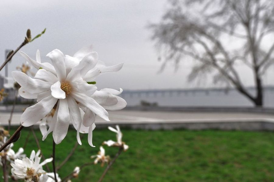 Dnipro River Flowers