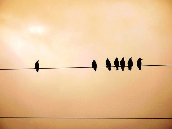 Bird Animal Wildlife Silhouette Perching Cable No People Outdoors Togetherness Sky Multi Colored Love Nature🌲 Imagery Birds On A Wire Colours Of Nature Cloud - Sky Mobile Phone Photography Lovephotography  Sillouette Photograph Illuminated