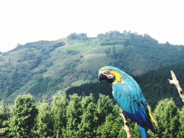 Parrot Bird Macaw One Animal Blue Animals In The Wild Animal Wildlife