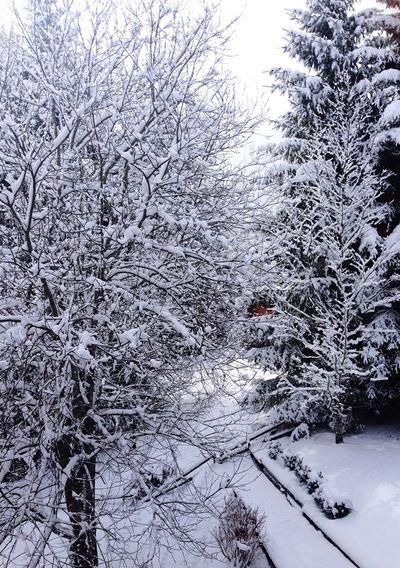 Winter Wintertime Winter Trees Winterwonderland Winter Wonderland Water Snow Snow ❄ Snowing Snow Day Cold Cold Temperature Cold Days Cold Winter ❄⛄ Weather Season  Tree Trees Tree_collection  Tree Trunk Tree And Sky Sun