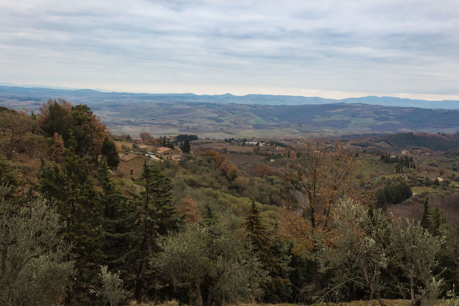Tuscany Winter Wood Beauty In Nature Countryside Day Forest Hill Italy Landscape Mountain Nature No People Outdoors Rural Scene Scenics Siena Sky Tranquility Tree Valley