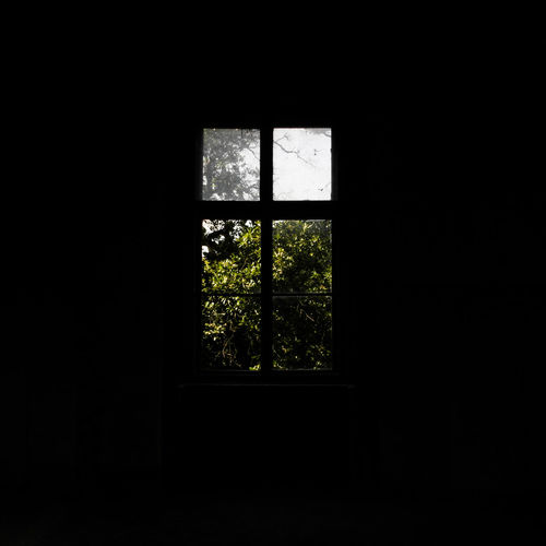 Darkroom Day Glass - Material Green Color Home Interior Indoors  No People Tree Window Window Frame