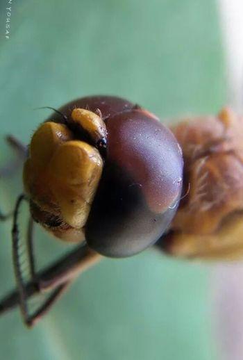 Eyes Bugs