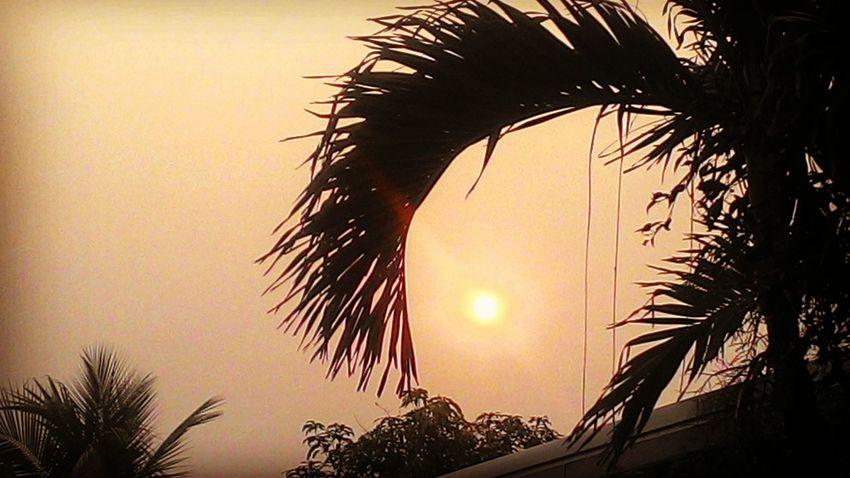 Tree Palm Tree Sunset Tree Trunk Silhouette Sun Sky