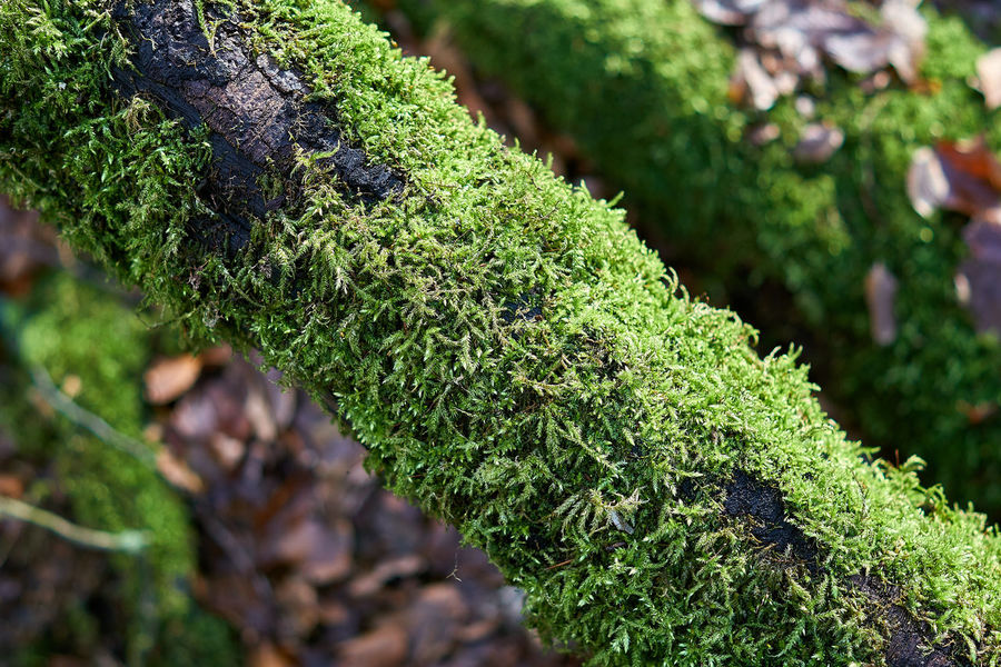 autumn in colors Tree Tree Trunk Moss Leaf Depth Of Field Bokeh Minimalism Minimalobsession Autumn In Colors Autumn Fall Fall Beauty Mood Nature Beauty In Nature Landscape Close-up Lucky's Colors Lucky's Memories Tranquility Forest Eeyem Nature Lover Nature Green Color No People Focus On Foreground Day Outdoors Close-up Growth