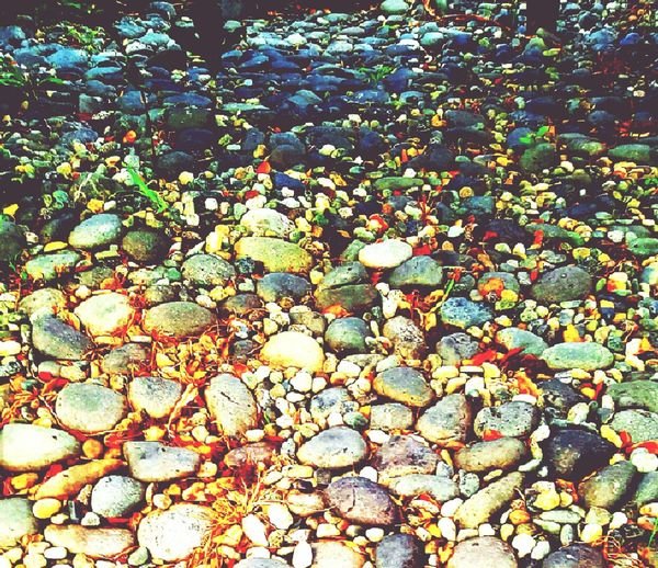 Beautifully Organized Full Frame Backgrounds High Angle View No People Outdoors Nature Growth Day Close-up Freshness Beauty In Nature Pebbles Pattern IMography