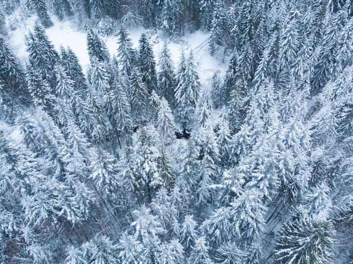 Snow Snowcapped Mountain Snow Covered Cold Temperature Winter Frozen Ice Tree Nature No People Forest Beauty In Nature Tranquility Pine Tree Landscape Poland Wood Woods Forest Photography Dronephotography Drone Photography