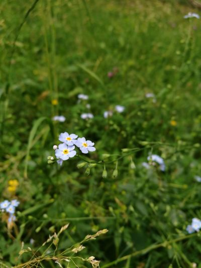 Flower Nature Plant Growth Outdoors Green Color No People Beauty In Nature Close-up Flower Head