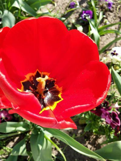 Flower Red
