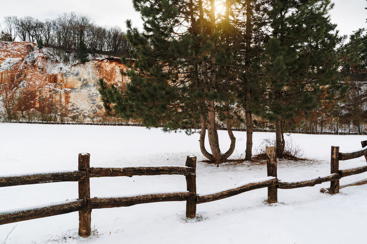 Snow Winter Cold Temperature Tree Fence Barrier Nature Boundary Beauty In Nature Tranquility Land Scenics - Nature Field Covering Tranquil Scene White Color Plant Non-urban Scene Day No People Outdoors Snowing