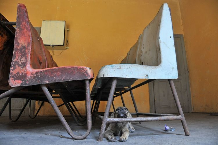 Romania Animal Themes Chair Day Dog Indoors  Lazy No People One Animal Waitingroom Young Dog