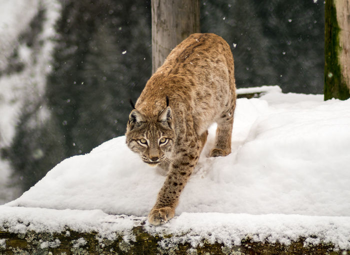 Cat looking away on snow covered land