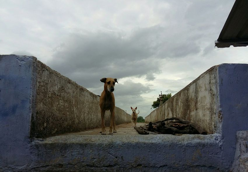 Hey wait! Am coming!.. Dog Looking Away Dog Running Animal Themes Sad Dog Dog Love Street Dogs Pet Emotions Linear Perspective