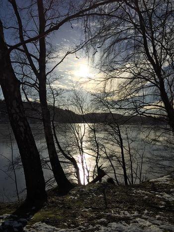 Icecoldwater Icecoldweather SoSweden WinterinSweden Natureislife Natureisamazing Björkträ IskallSjö Vackerutsikt