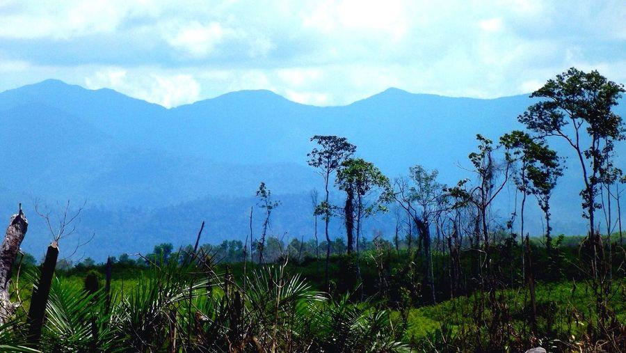 // Pegunungan Meratus // Meratus Mountain // Alamunda // Hutan // Jungle // Pepohonan // Trees // Gunung Dan Awan // Montains And Cloud