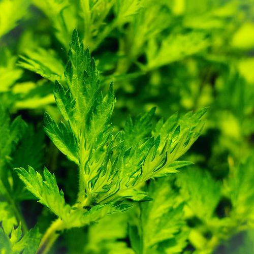 Green Leaf Leaves Plants 新緑
