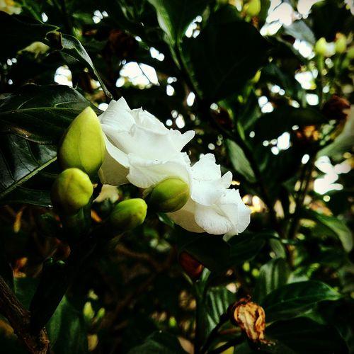Flores Seven Lakes