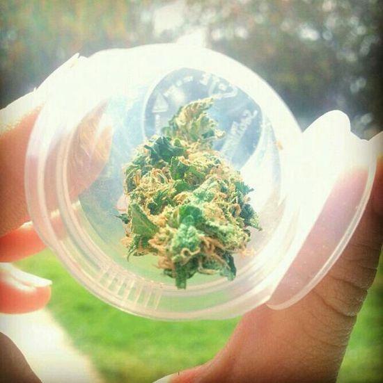 Marijuana Highlife Iloveweed Smokeweedeveryday