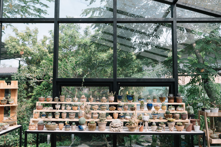 Display of Cactuses and Ceramic Pots Cactus Garden Cactus Pot Catus Ceramic Art Ceramic Pot Craft Craftmanship Display Freshness Greenery Greenhouse Growth Home Decoration  Large Group Of Objects Nature Showcasing Studio Sunny Day