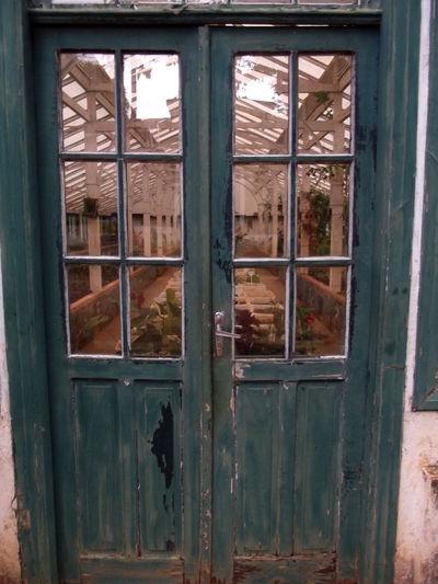 Herbarium Lines Vintage Door Doorporn Door_series Green