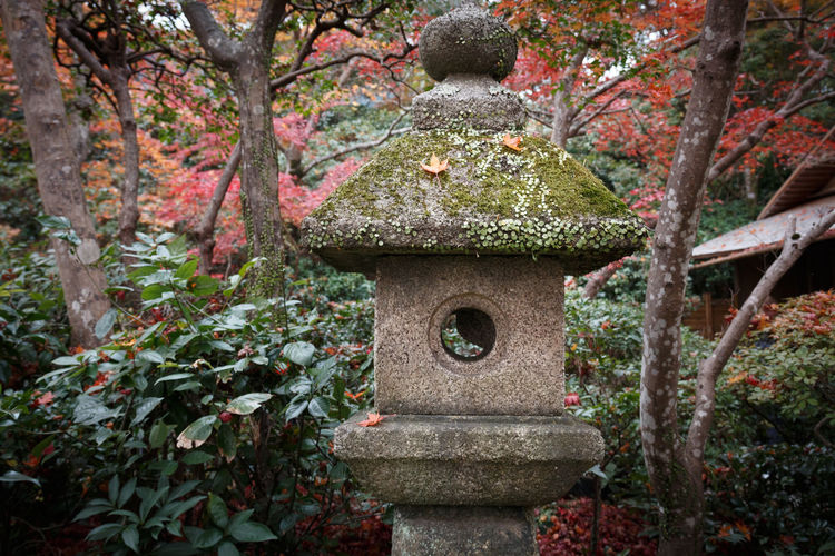 Plant Tree Nature No People Religion Day Architecture Growth Belief Grave Plant Part Cemetery Stone Autumn Built Structure Leaf Spirituality Outdoors Japanese Garden Change