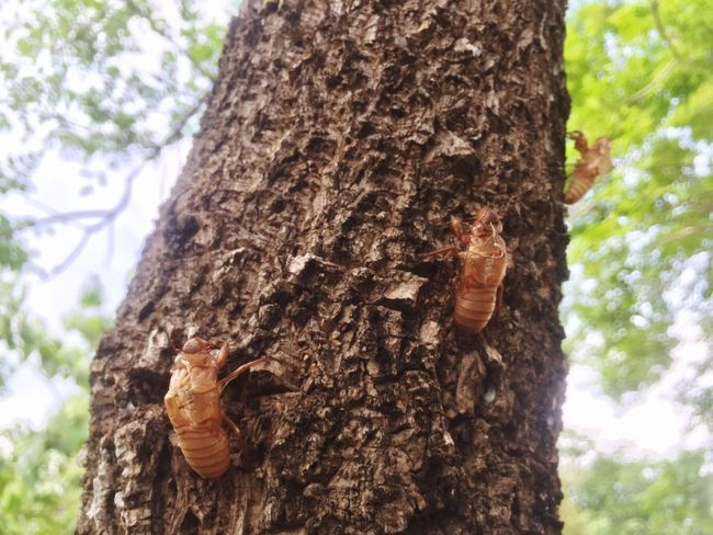 Trunk Tree Trunk Tree Plant Nature Textured  Focus On Foreground Growth Animal Wildlife Forest Animal Themes Beauty In Nature Brown Animals In The Wild Low Angle View Close-up Day Invertebrate Land Insect