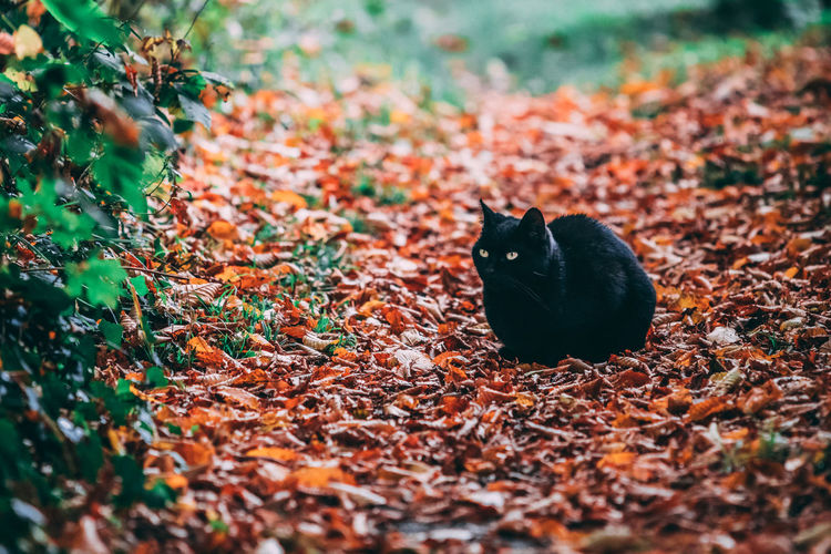 Close-up of a cat on field during autumn