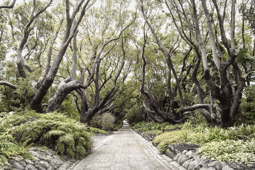 EyeemphotoBlack & White Cape Town Cape Town, South Africa Cobblestone Diminishing Perspective Footpath Forest Garden Green Growth Kirstenbosch Kirstenbosch National Botanical Garden Narrow Nature Outdoors Pathway Plant Tranquil Scene Tranquility Tree Vanishing Point Walkway WoodLand Pivotal Ideas