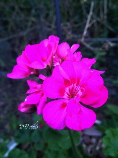 Flower#garden#nature#ecuador#santodomingoecuador#eyeEmfollowers#iphoneonly#nofiltrer#macro_garden#pretty#beautiful#followme#sho EyeEm Best Shots Flower Collection Eye Em Best Shots -Flowers
