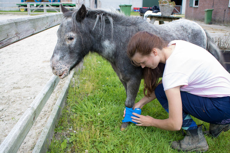Full length of young woman applying bandage to injured pony on field