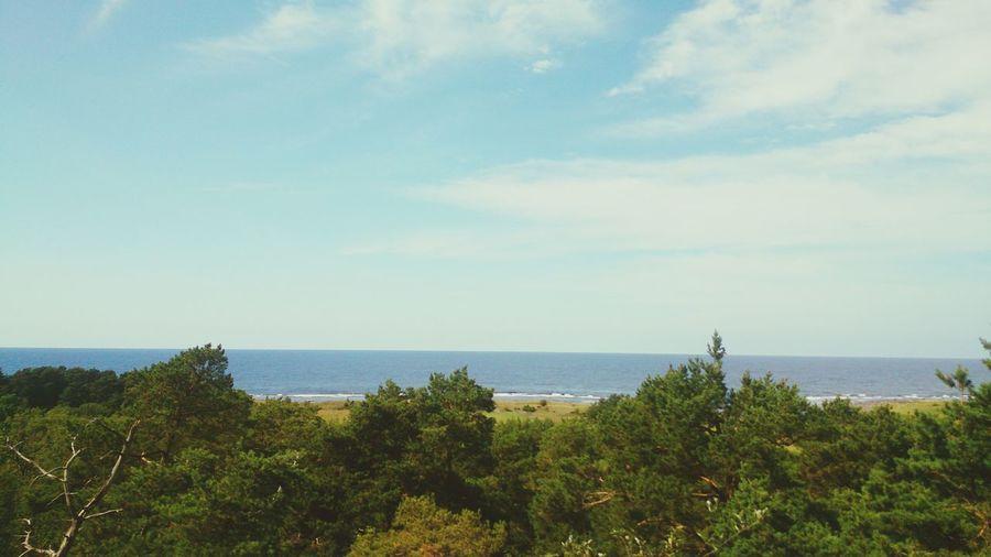 Trees Östersjön Gotland Sky