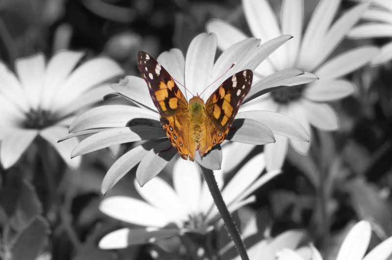Animal Themes Animal Wildlife Animals In The Wild Beauty In Nature Butterfly - Insect Close-up Day Flower Flower Head Fragility Freshness Growth Insect Nature No People One Animal Outdoors Perching Petal Plant Pollination Sunlight